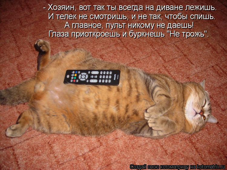 Котоматрица - - Хозяин, вот так ты всегда на диване лежишь. А главное, пульт никому