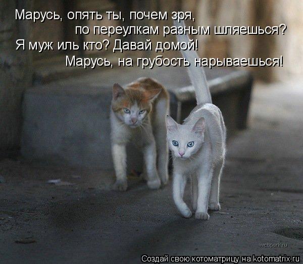 Котоматрица: Марусь, опять ты, почем зря,  по переулкам разным шляешься? Я муж иль кто? Давай домой! Марусь, на грубость нарываешься!