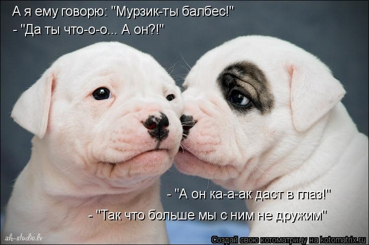 """Котоматрица: А я ему говорю: """"Мурзик-ты балбес!"""" - """"Да ты что-о-о... А он?!"""" - """"А он ка-а-ак даст в глаз!"""" - """"Так что больше мы с ним не дружим"""""""