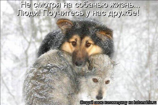 Котоматрица: Не смотря на собачью жизнь... Люди! Поучитесь у нас дружбе!