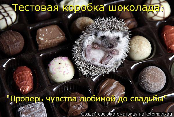 """Котоматрица: Тестовая коробка шоколада: """"Проверь чувства любимой до свадьбы"""""""