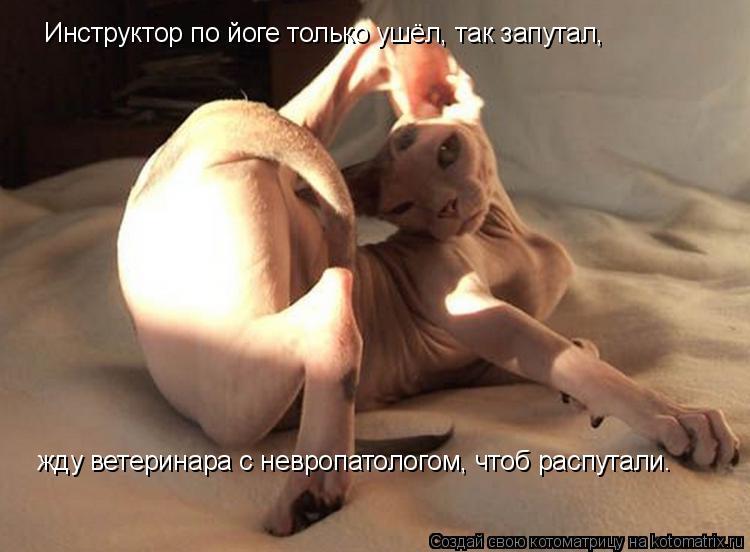 Котоматрица: Инструктор по йоге только ушёл, так запутал,   жду ветеринара с невропатологом, чтоб распутали…