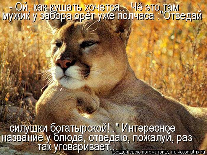 http://kotomatrix.ru/images/lolz/2011/10/27/1024491.jpg