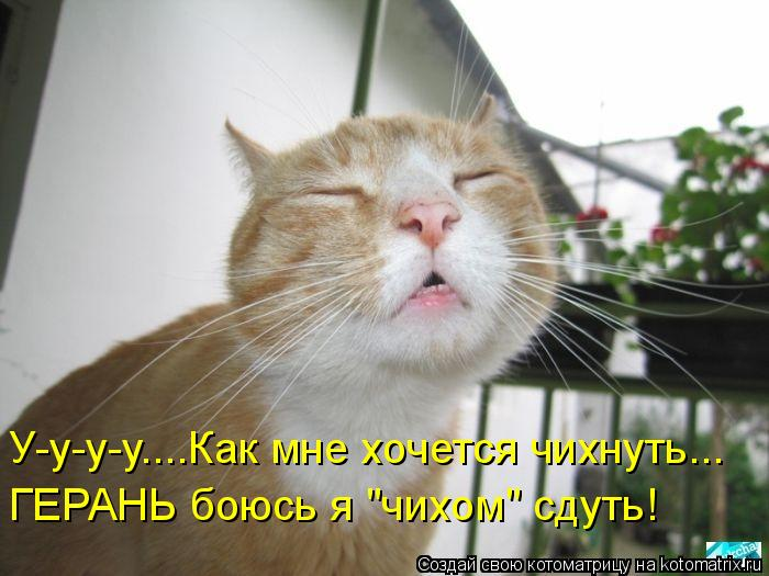 """Котоматрица: У-у-у-у....Как мне хочется чихнуть... ГЕРАНЬ боюсь я """"чихом"""" сдуть!"""