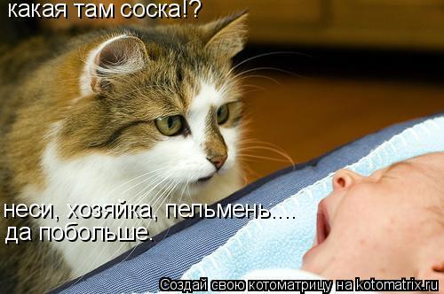 Котоматрица: какая там соска!? неси, хозяйка, пельмень....  да побольше.