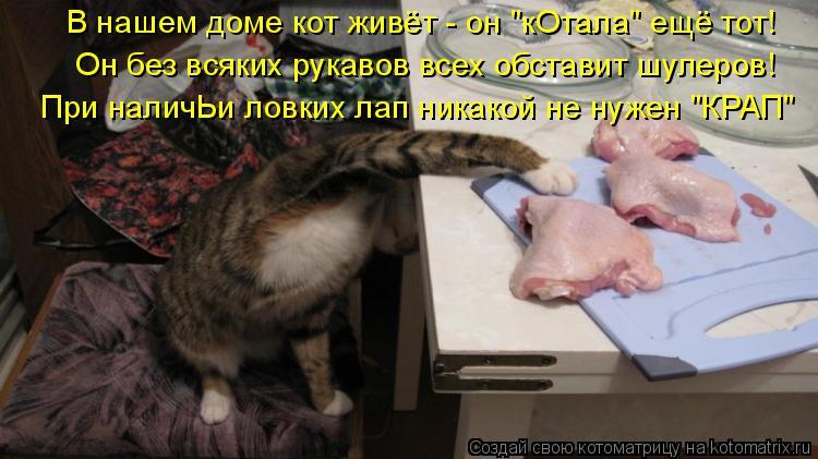"""Котоматрица: В нашем доме кот живёт - он """"кОтала"""" ещё тот! Он без всяких рукавов всех обставит шулеров! При наличЬи ловких лап никакой не нужен """"КРАП"""""""