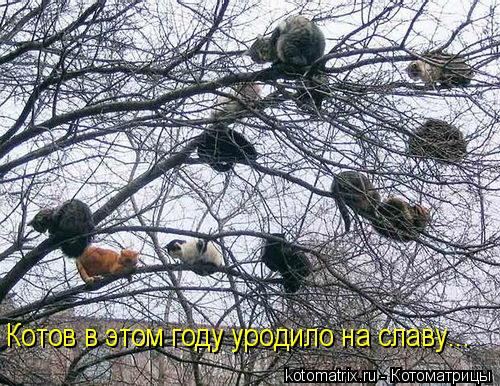 Котоматрица: Котов в этом году уродило на славу...