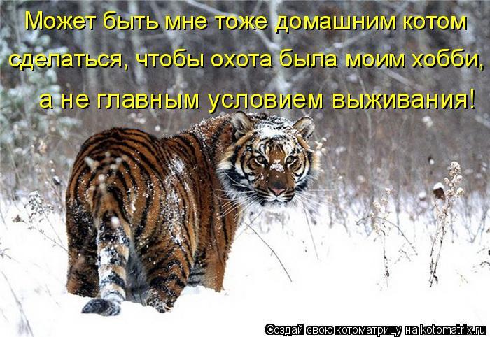 Котоматрица: Может быть мне тоже домашним котом сделаться, чтобы охота была моим хобби, а не главным условием выживания!