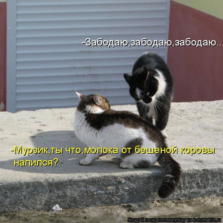 Котоматрица: -Забодаю,забодаю,забодаю... -Мурзик,ты что,молока от бешеной коровы  напился?