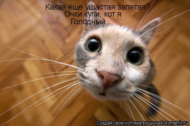 Котоматрица: Какая еще ушастая запятая? Очки купи, кот я Голодный...