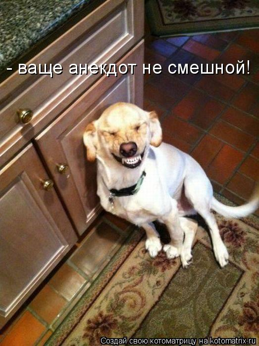 Котоматрица: - ваще анекдот не смешной!