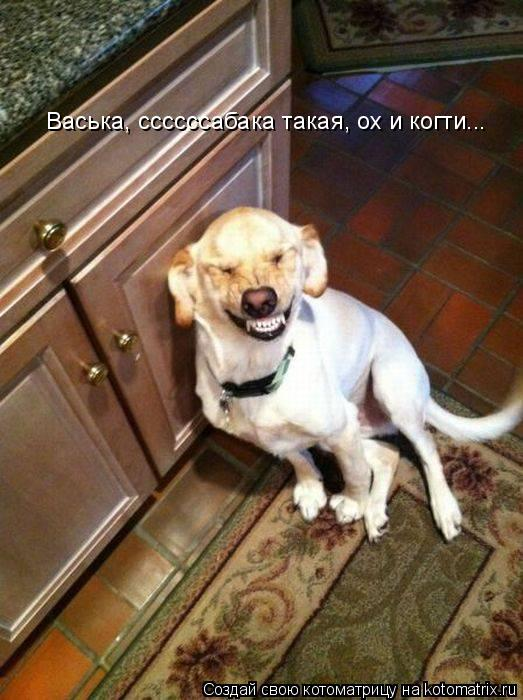 Котоматрица: Васька, ссссссабака такая, ох и когти...