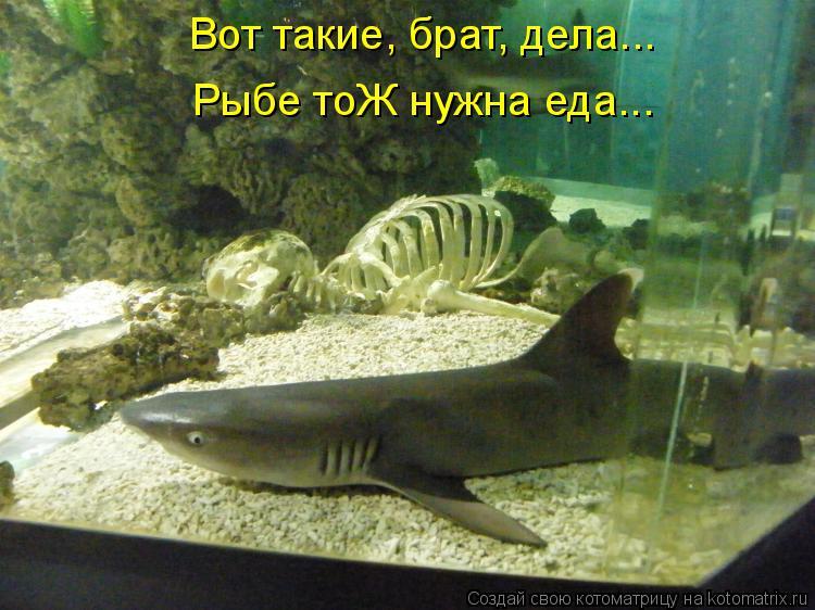 Котоматрица: Вот такие, брат, дела... Рыбе тоЖ нужна еда...