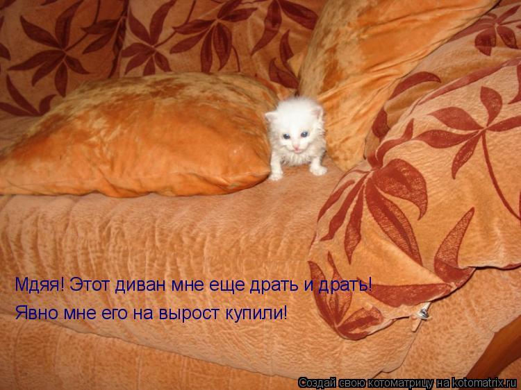 Котоматрица: Мдяя! Этот диван мне еще драть и драть! Явно мне его на вырост купили!