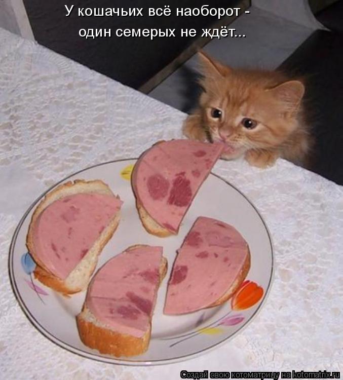 Котоматрица: У кошачьих всё наоборот -  один семерых не ждёт...