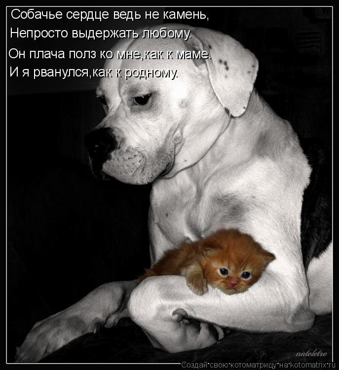 Котоматрица: Собачье сердце ведь не камень, Он плача полз ко мне,как к маме. Непросто выдержать любому. И я рванулся,как к родному.