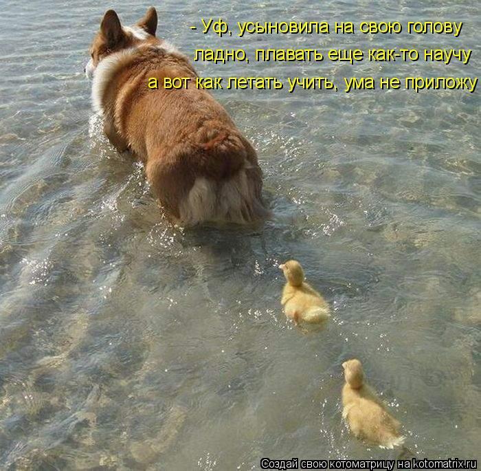 Котоматрица: - Уф, усыновила на свою голову ладно, плавать еще как-то научу а вот как летать учить, ума не приложу