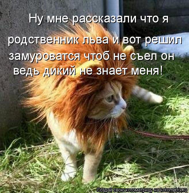 Котоматрица: Ну мне рассказали что я  родственник льва и вот решил замуроватся чтоб не съел он  ведь дикий не знает меня!