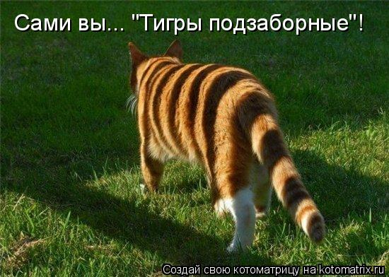 "Котоматрица - Сами вы... ""Тигры подзаборные""!"