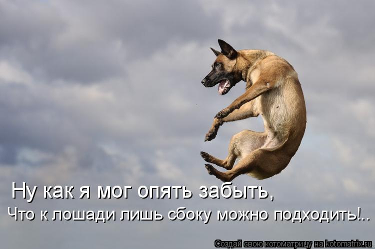 Котоматрица: Ну как я мог опять забыть, Что к лошади лишь сбоку можно подходить!..