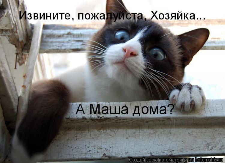Котоматрица: Извините пожалуйста, а ветер стих? Третий день до дома дойти  не могу. | 544x750