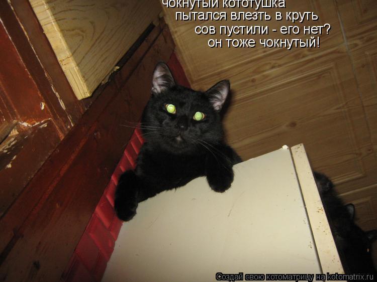 Котоматрица: чокнутый кототушка пытался влезть в круть сов пустили - его нет? он тоже чокнутый!