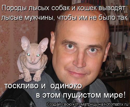 Котоматрица: Породы лысых собак и кошек выводят лысые мужчины, чтобы им не было так тоскливо и  одиноко  в этом пушистом мире!