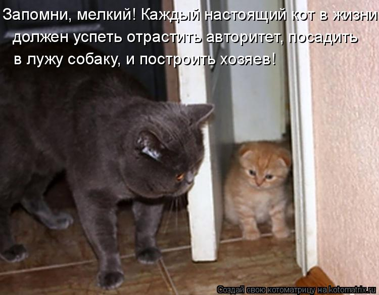 Котоматрица: должен успеть отрастить авторитет, посадить Запомни, мелкий! Каждый настоящий кот в жизни  в лужу собаку, и построить хозяев!