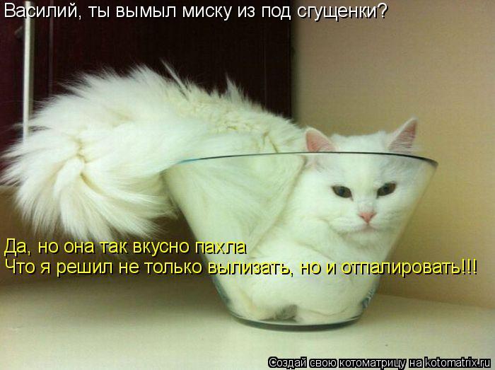 Котоматрица: Василий, ты вымыл миску из под сгущенки? Да, но она так вкусно пахла Что я решил не только вылизать, но и отпалировать!!!