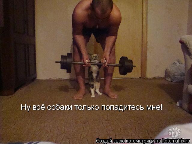 Котоматрица: Ну всё собаки только попадитесь мне!
