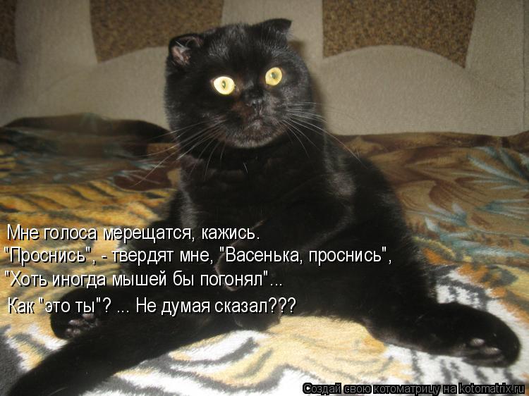 """Котоматрица: Мне голоса мерещатся, кажись. """"Проснись"""", - твердят мне, """"Васенька, проснись"""", """"Хоть иногда мышей бы погонял""""... Как """"это ты""""? ... Не думая сказал???"""