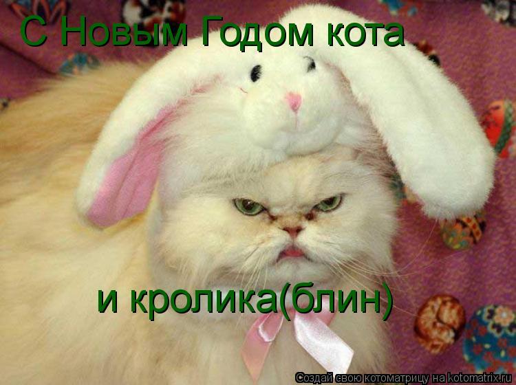 Котоматрица: С Новым Годом кота  и кролика(блин)