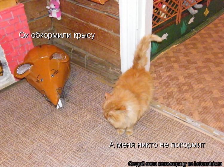Котоматрица: Ох обкормили крысу А меня никто не покормит