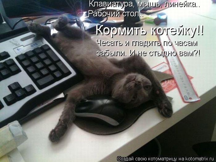 Котоматрица: Клавиатура, мышь, линейка.. Рабочий стол.. Кормить котейку!! Чесать и гладить по часам забыли. И не стыдно вам?!