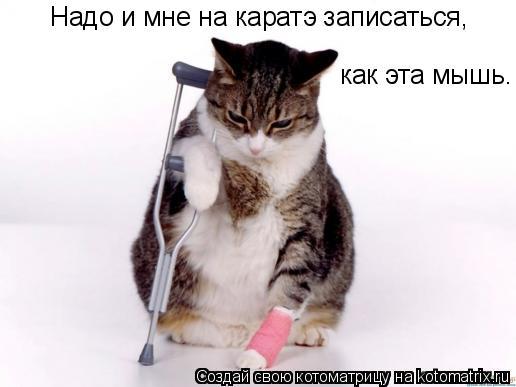 Котоматрица: Надо и мне на каратэ записаться, как эта мышь.