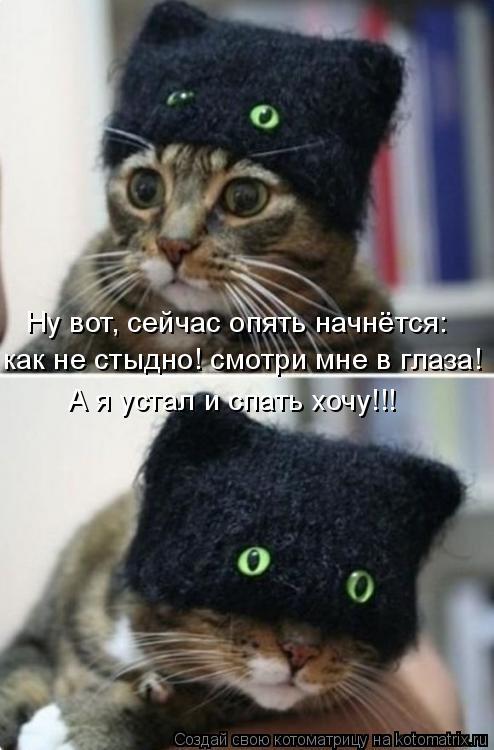 Котоматрица: Ну вот, сейчас опять начнётся:  как не стыдно! смотри мне в глаза! А я устал и спать хочу!!!