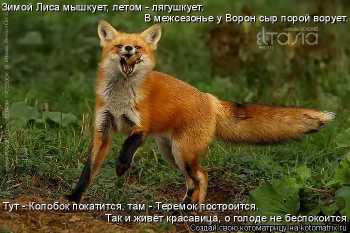 Котоматрица: Зимой Лиса мышкует, летом - лягушкует. Тут - Колобок покатится, там - Теремок построится. Так и живёт красавица, о голоде не беспокоится. В меж