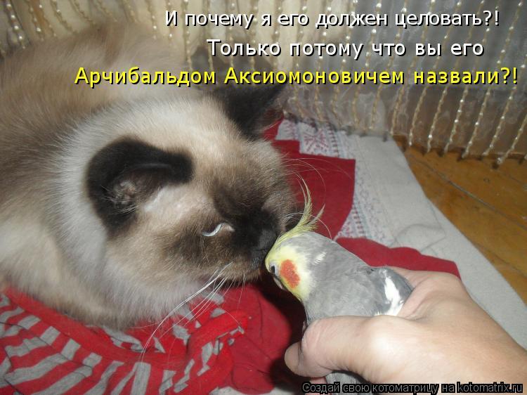 Котоматрица: И почему я его должен целовать?! Только потому что вы его  Арчибальдом Аксиомоновичем назвали?!