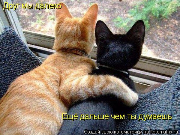 Котоматрица: Друг мы далеко Ещё дальше чем ты думаешь