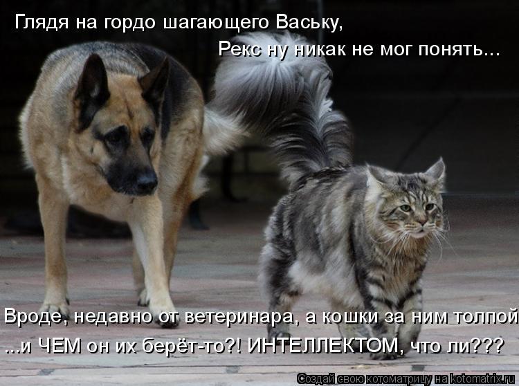Котоматрица: Глядя на гордо шагающего Ваську,  Рекс ну никак не мог понять... Вроде, недавно от ветеринара, а кошки за ним толпой ...и ЧЕМ он их берёт-то?! ИНТ