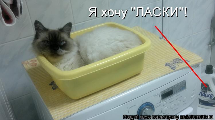 """Котоматрица: Я хочу """"ЛАСКИ""""! ___________"""