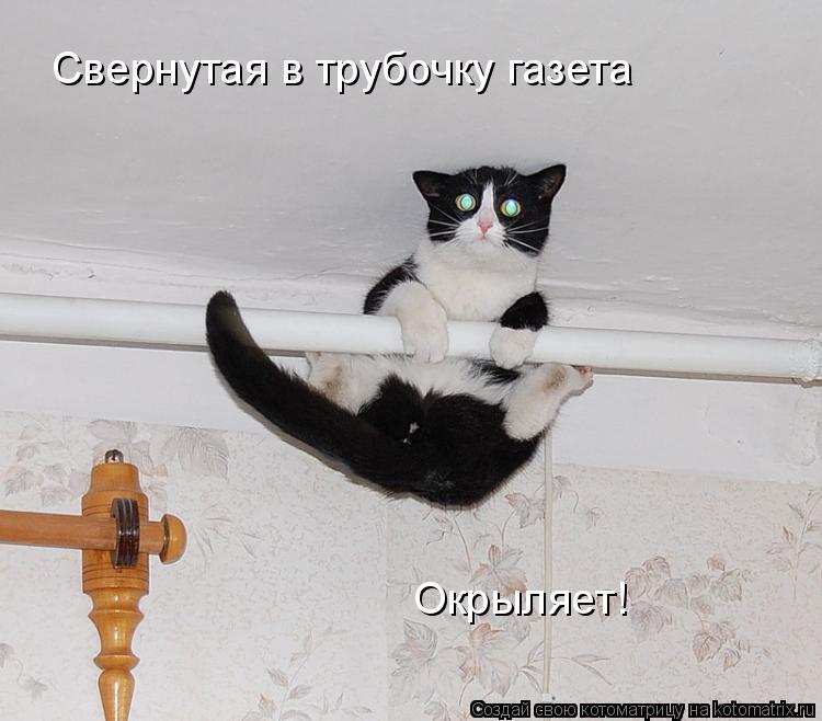 Котоматрица: Свернутая в трубочку газета Окрыляет!