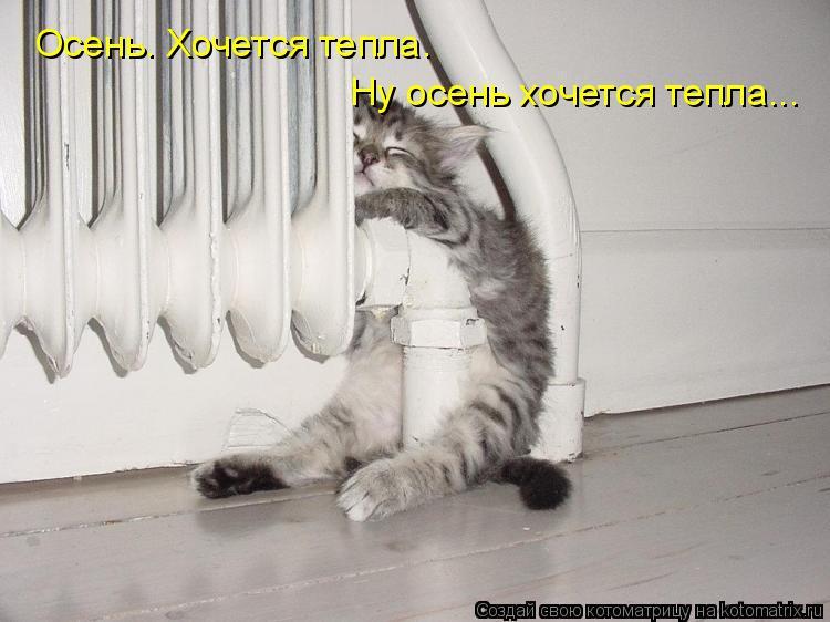 Котоматрица: Осень. Хочется тепла. Ну осень хочется тепла...