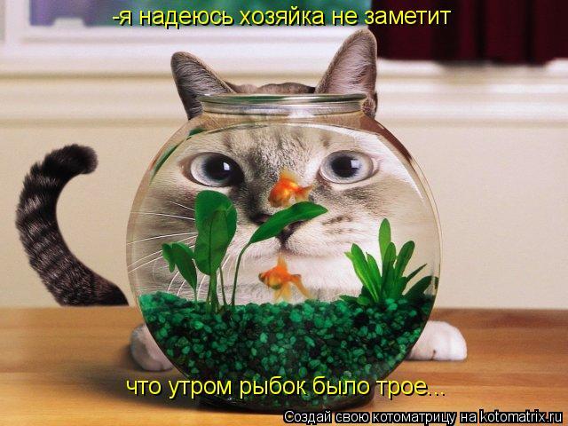 Котоматрица: -я надеюсь хозяйка не заметит что утром рыбок было трое...