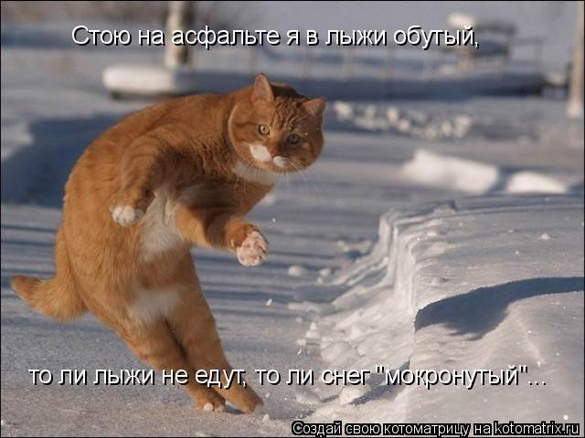 """Котоматрица: то ли лыжи не едут, то ли снег """"мокронутый""""... Стою на асфальте я в лыжи обутый,"""