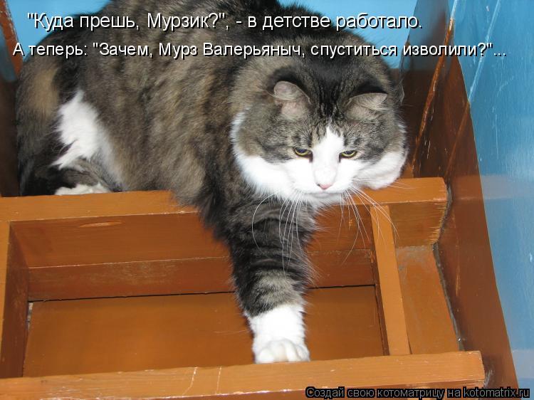 """Котоматрица - """"Куда прешь, Мурзик?"""", - в детстве работало. А теперь: """"Зачем, Мурз Ва"""