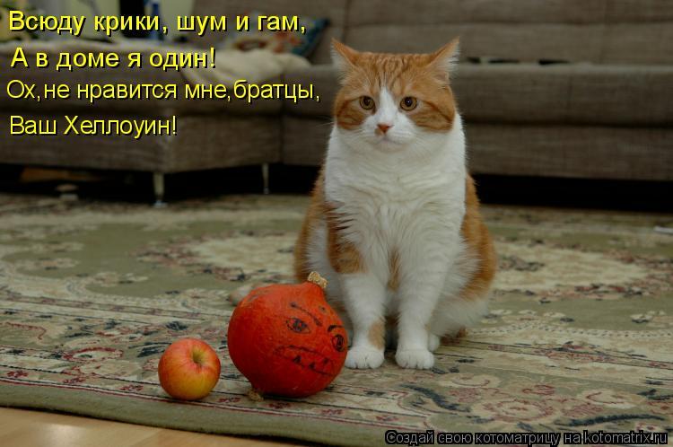 Котоматрица: Всюду крики, шум и гам,  А в доме я один! Ох,не нравится мне,братцы,  Ваш Хеллоуин!