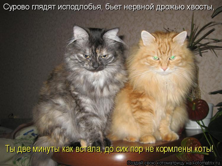 Котоматрица: Сурово глядят исподлобья, бьет нервной дрожью хвосты, Ты две минуты как встала, до сих пор не кормлены коты!