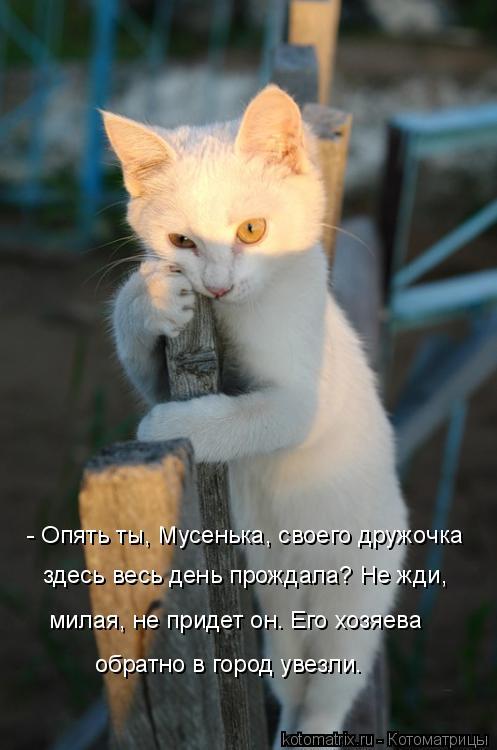Котоматрица: - Опять ты, Мусенька, своего дружочка  здесь весь день прождала? Не жди, милая, не придет он. Его хозяева обратно в город увезли.
