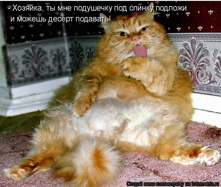 Котоматрица: - Хозяйка, ты мне подушечку под спинку подложи  и можешь десерт подавать!